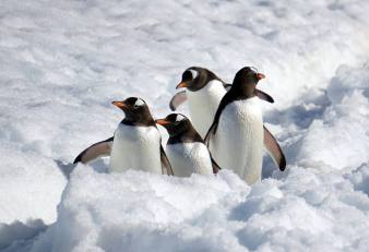 photos_and_videos/AntarcticaPenguins_10155338149716869/18209067_10155338153166869_6190358301511219702_o_10155338153166869.jpg