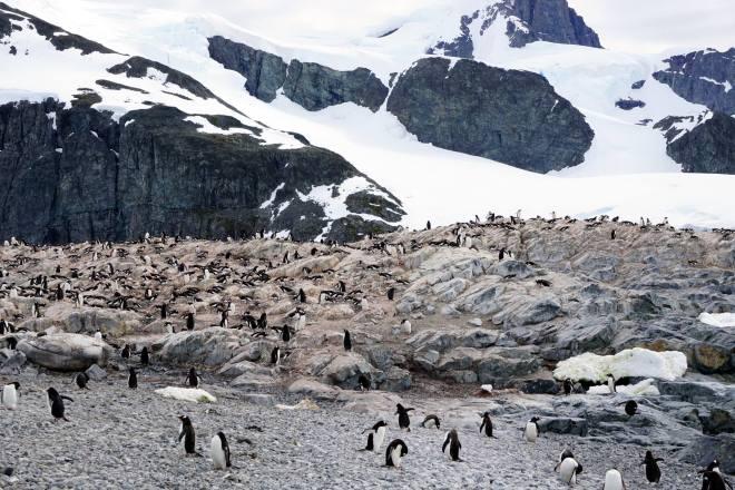 photos_and_videos/AntarcticaPenguins_10155338149716869/18209314_10155338162941869_2963052321685446569_o_10155338162941869.jpg
