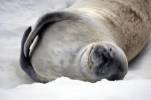 photos_and_videos/Antarcticawildlife_10155834976816869/22051060_10155834987056869_1682047938578450632_o_10155834987056869.jpg