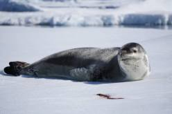 photos_and_videos/Antarcticawildlife_10155834976816869/22051379_10155834989001869_8042766085762219608_o_10155834989001869.jpg