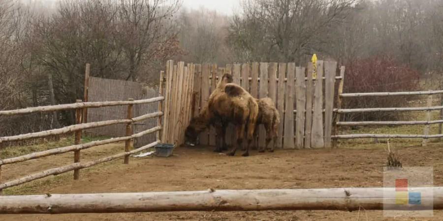 Zoo Zajezd   Kamel