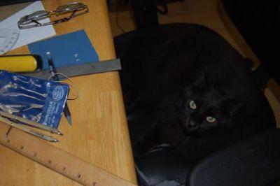 chair stealing cat