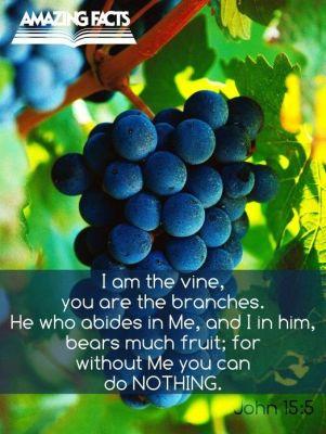 John 15 5 I am the vine with grape background