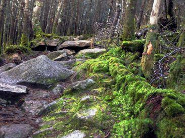 So much moss.