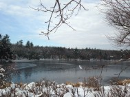 Dorr's Pond is starting to freeze.