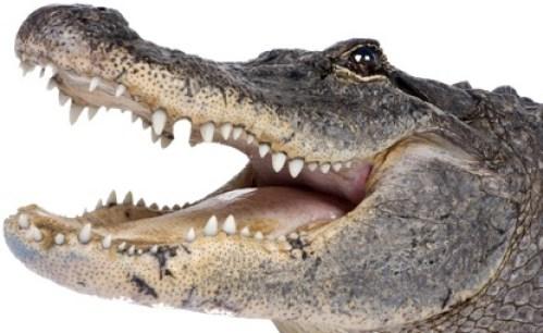 CoP10 Croc