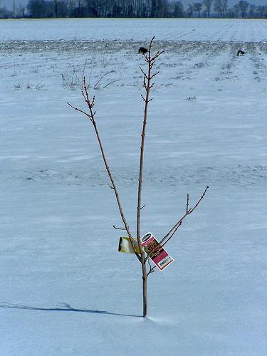 snow tree by plain ethos