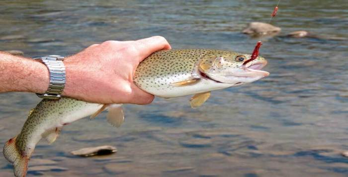 Top 5 Fishing Tips You Must Know