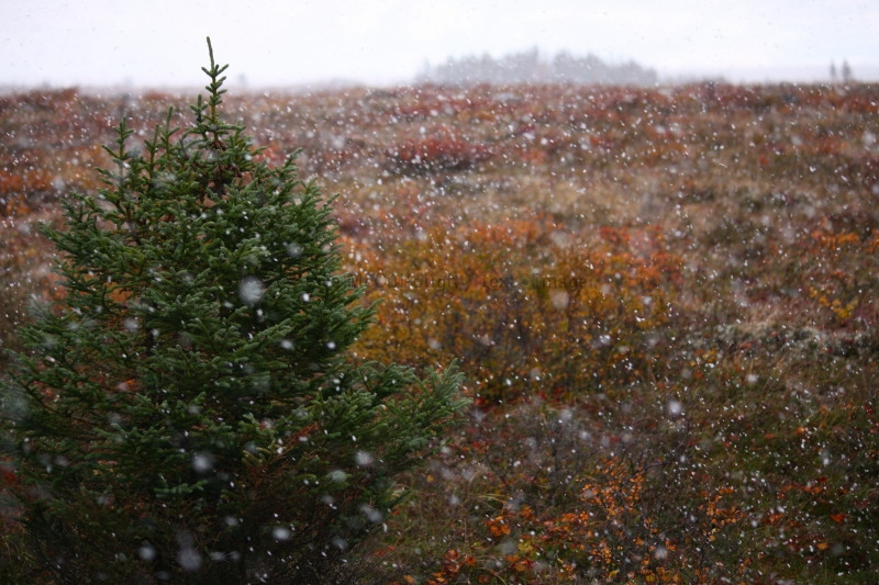 Snowfall on tundra