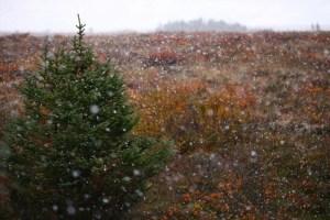Snowfall on tundra