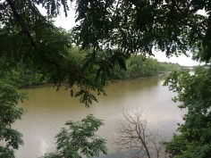 Theodore Roosevelt Island from Rosslyn