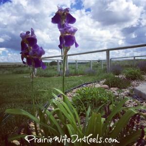 Prairie Landscaping