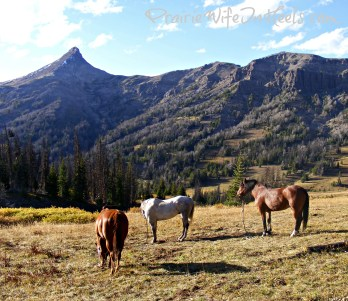 Mountains and horses elk hunting