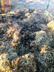 smoldering hay