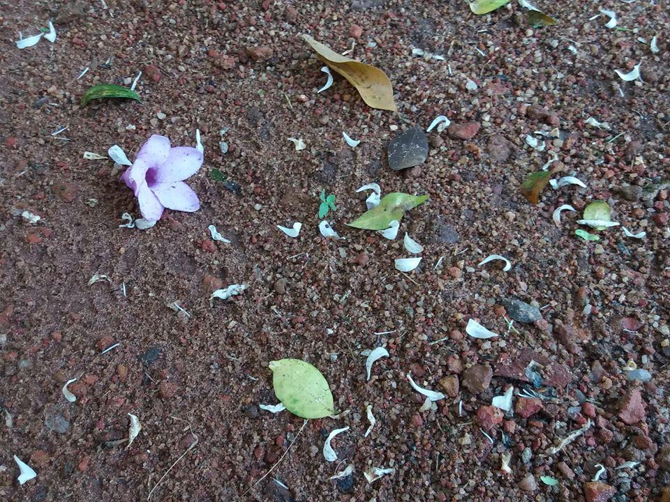 A purple flower dropped under a tree