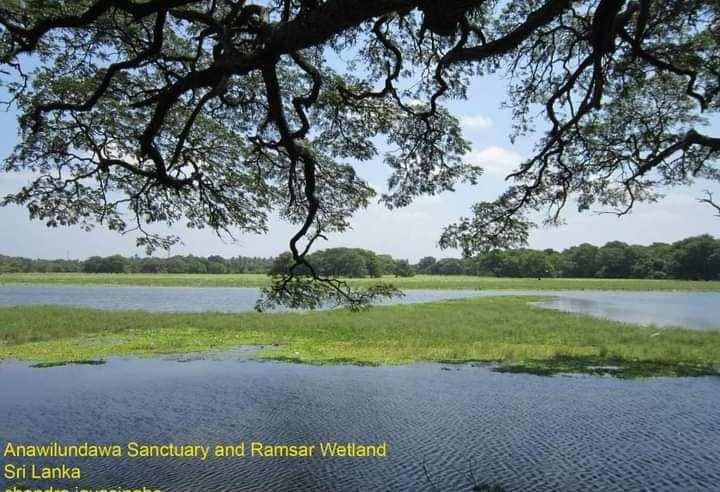 Anavilundawa wetland