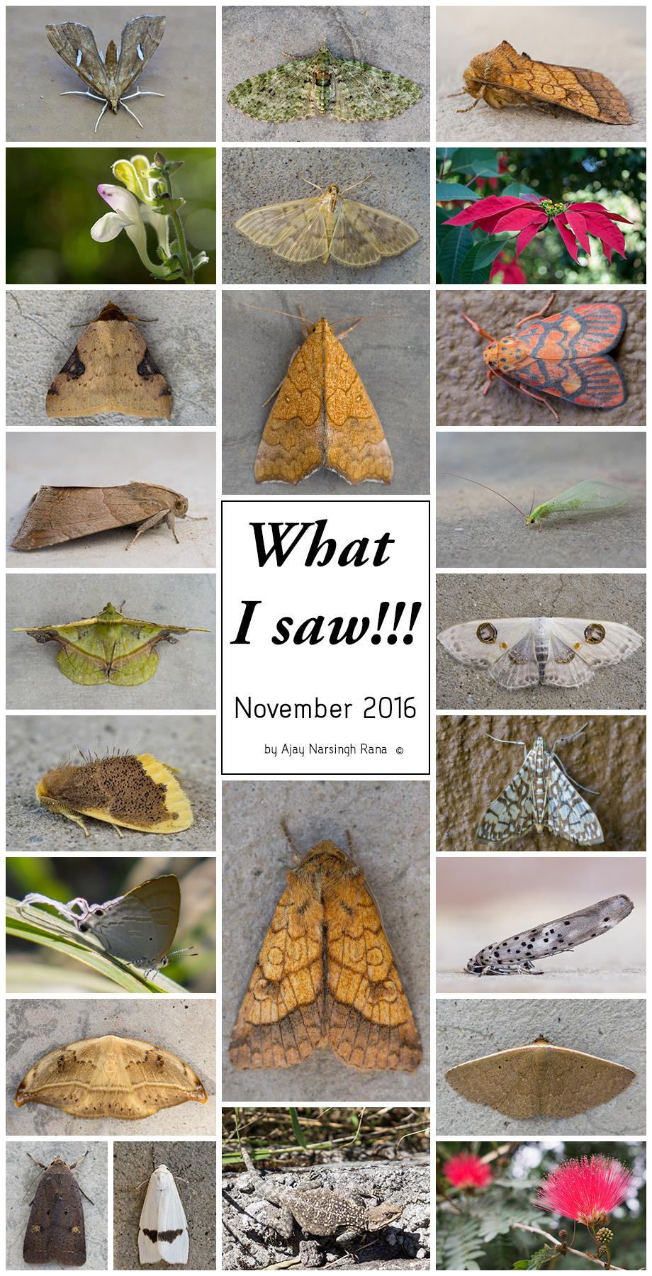 Prakriti Nepal_What i saw in November 2016