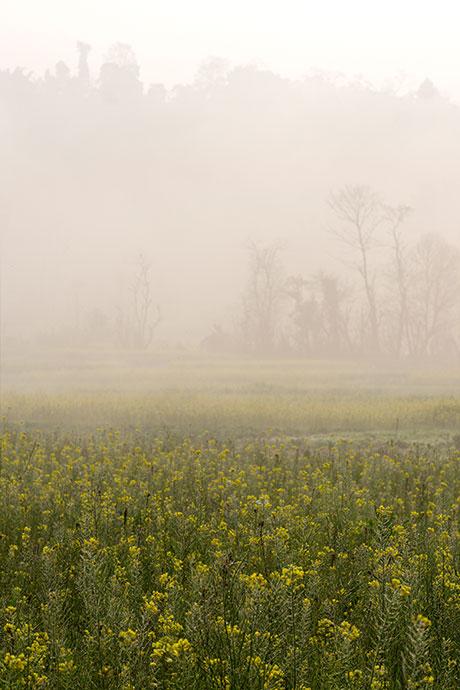 Bungamati fog sunrise