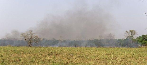 Grassland-management