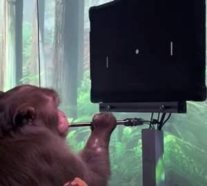 Neuralink - Macaco Joga Ping Pong Telepáticamente