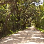Photo: Road to Botany Bay Plantation, SC