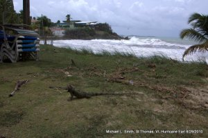 Photo: two iguanas on beach