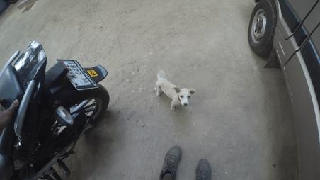 The cute puppy
