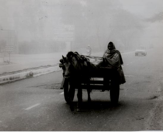horse-cart-in-delhi-winter-morning1
