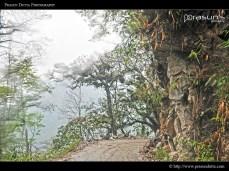 Dangerous Roads of Sikkim