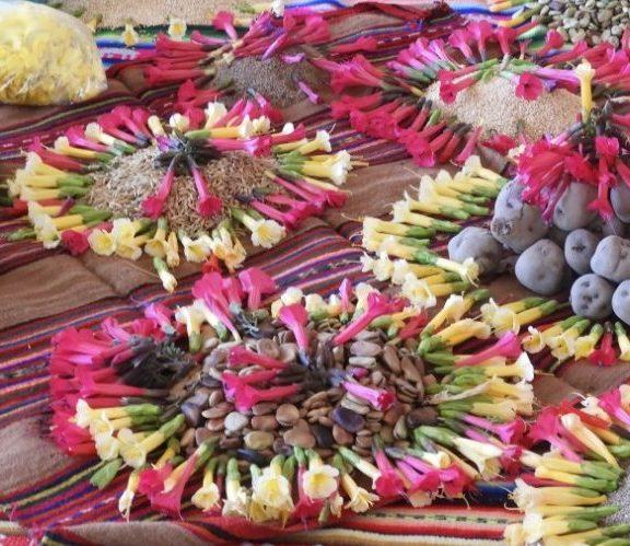 Puno: Ritual a las semillas para iniciar la siembra grande
