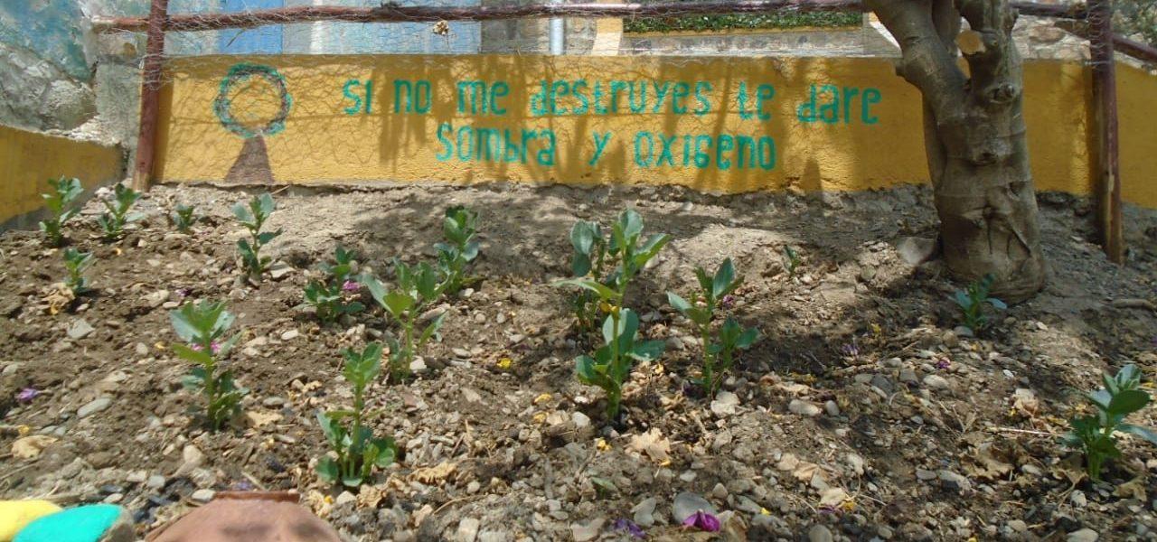 La Paz: «Yapus urbanos» para mitigar la crisis alimentaria durante y post pandemia