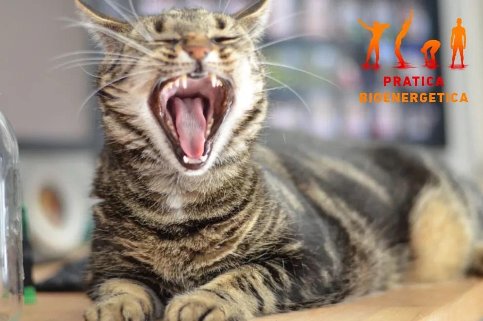 Sbadiglio-contagioso-felino-pratica-bioenergetica