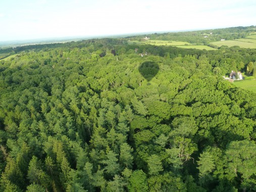 Bosky landscape
