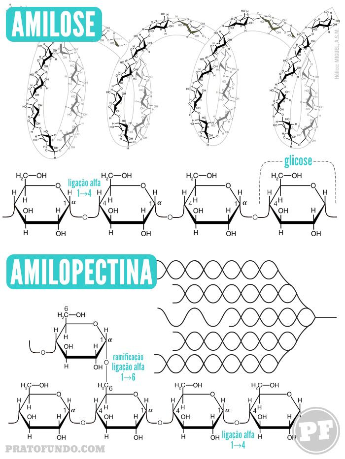 Amido: Amilose e Amilopectina por PratoFundo.com