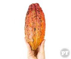 PraComer: Já Comeu Cacau Fresco? É, o Fruto! por PratoFundo.com