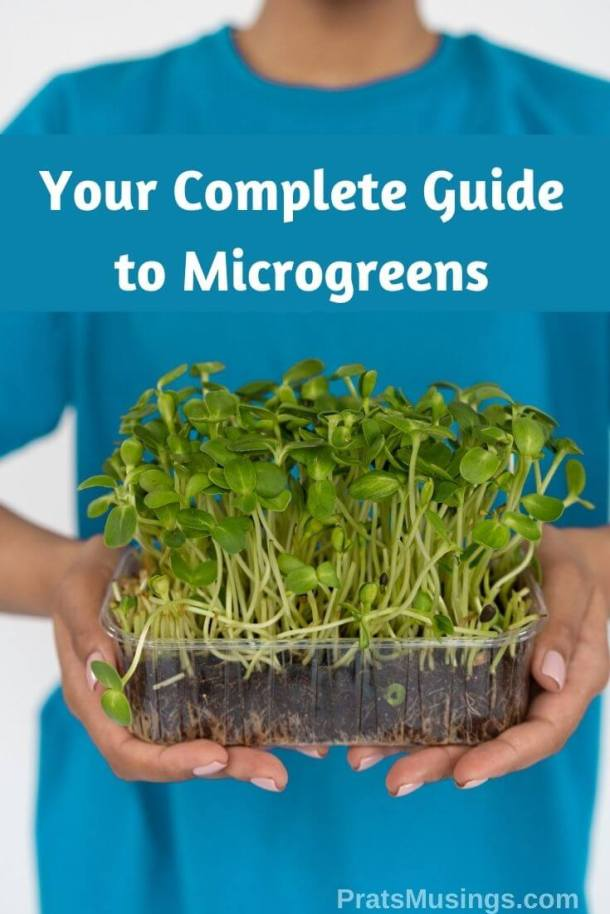 Your complete guide to Microgreens! For wellness, better gut health, healthy skin and more! This post is all about benefits of microgreens.
