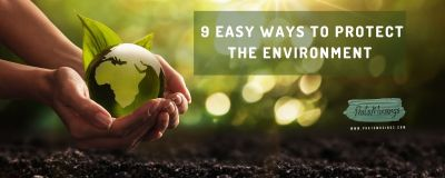 easy ways to protect the environment