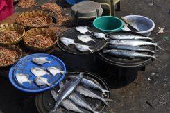 Harne fish Market