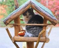 Как приучит кошку к новому месту. Адаптация кота к дому: впервые на новом месте