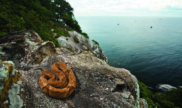 5 serpientes por cada metro cuadrado