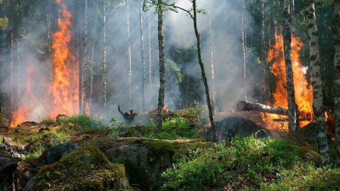 Incendios forestales , Incendios, Oreo , KitKat , Marcas, Empresas , plantas , naturaleza, árboles, bosques , Flora , Indonesia , Asia, fuego