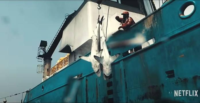 seaspiracy, documental seaspiracy, documentales netflix, mejores documentales, pesca en el oceano, mar, seaspiracy docu