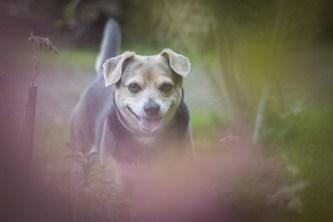 przydatne-komendy-fotografowanie-psow-blog-psach-02