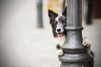 przydatne-komendy-fotografowanie-psow-blog-psach-08