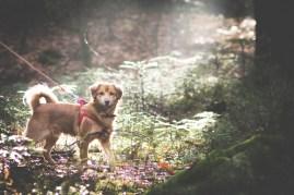 przydatne-komendy-fotografowanie-psow-blog-psach-13