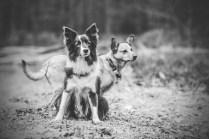 przydatne-komendy-fotografowanie-psow-blog-psach-15