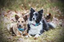 przydatne-komendy-fotografowanie-psow-blog-psach-16