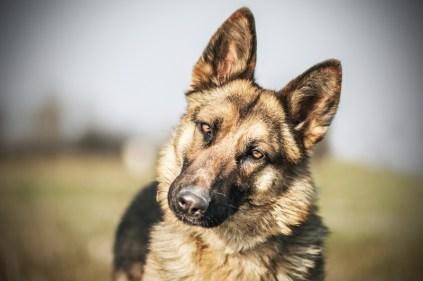 przydatne-komendy-fotografowanie-psow-blog-psach-26