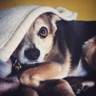 przydatne-komendy-fotografowanie-psow-blog-psach-40