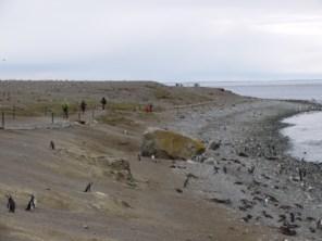 Magellanic_penguins_on_Isla_Magdalena_Patagonia_Chile.JPG